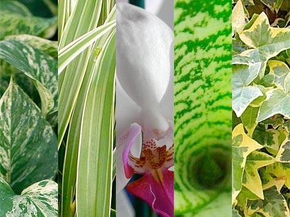 Dure a morire 5 piante da appartamento a prova di for Piante appartamento buio