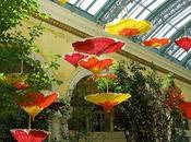 paper umbrellas_Bellagio Botanical Gardens