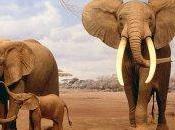 Pulsatilla altro ancora... elefanti!