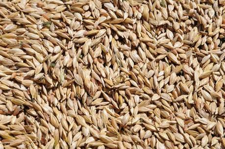 Le Virtù dei cereali secondo Nonna: Il Farro