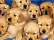 tratta cuccioli