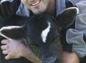 Uenuku Richie McCow sbaglia pronostico: grigliata vitello vista?