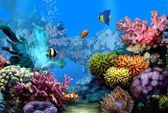 Acquario 3d come screensaver del desktop paperblog for Sfondo animato pesci