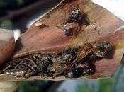 sarracenie catturano insetti