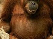L'etica primati