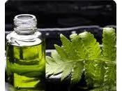 Olio neem contro zanzare