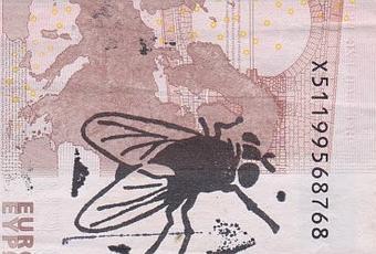 Link progetto dove volano le mosche by hogre paperblog - Cimici dove vivono ...