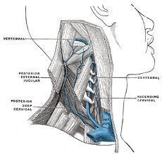 Esclerosis Múltiple, nuevas confirmaciones de la vena yugular anormal.  Un estudio realizado por la Universidad de Belgrado