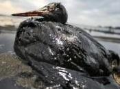 Buone notizie Golfo Messico: bloccata marea nera.