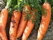 Cosa coltivare nell'orto, come carota