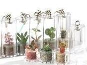 Ambiente: Arrivano mini piante Minì