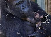 tutte belle mamme mondo (anche quelle gorilla!)