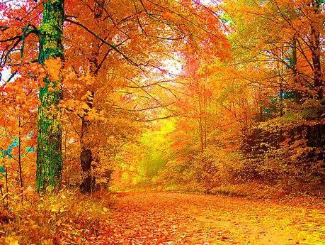 Perché le foglie delle piante sono verdi ma in autunno ingialliscono? Paperblog