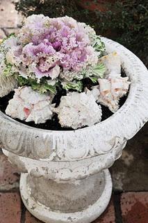 Cavolo ornamentale paperblog for Cavolo ornamentale