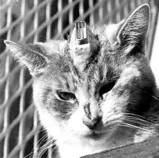 Finto animalismo e negazionisti delle scie chimiche: due link per approfondire