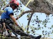 Albero: Vota Monumento della Natura