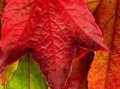 Sfondi Desktop: Foglie d'autunno extra large
