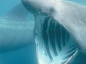 squalo elefante, senza paura, afferma Eleonora!