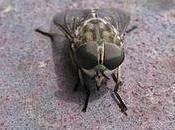 mosca nella Bottega mistero