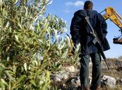 Guerra ecologica palestina