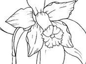 Coltivare orchidee, sentirne profumo