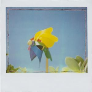 Polaroiders Fundraising for Levanto – Third auction reminder