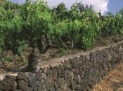 vini dell'Etna protagonisti World Wine Symposium, Davos Lago Como