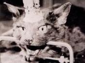 Vivisezione sperimentazione sugli animali