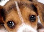 """Test sugli animali: """"buone"""" notizie"""