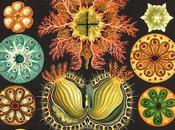 Spettacolari patterns nelle illustrazioni scientifiche ernst haeckel