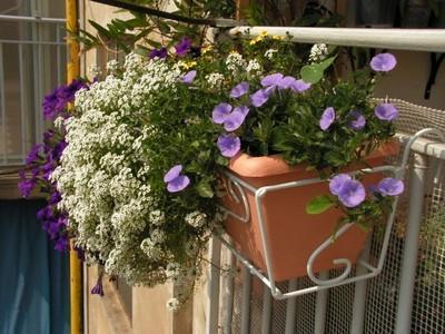 Fioriere da balcone paperblog - Piante fiorite invernali da esterno ...