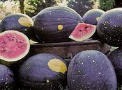 sono seed savers (conservatori sementi)?