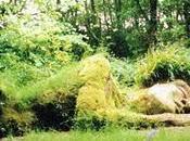 vacanza paesaggista giardini inglesi