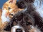 Tassa cani gatti: bufala
