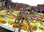 Thailandia Festival pranzo scimmie Buri