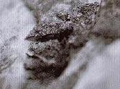 Broken Consort Birch [2007]