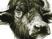 Smascherare bufala passi