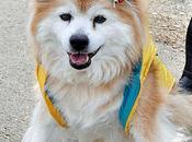 Morto Giappone cane vecchio mondo: aveva anni