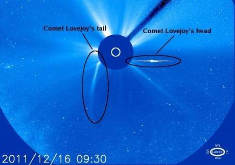 La cometa Lovejoy è sopravvissuta all'incontro con il Sole
