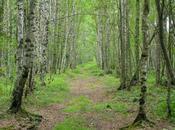 Perduti bosco