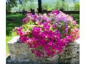 Quali fiori piante mettere vasi giardino, terazzo balcone? Ecco composizioni belle