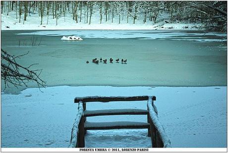Foto laghetto di umbra ghiacciato con germani reali for Laghetto per papere