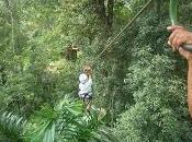 Canopy Tour/ Line
