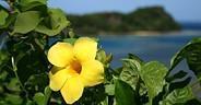 Ecoturismo a Fiji - i colori e la pace della natura tropicale
