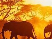 Lettere dall'Africa Prefazione