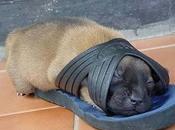 Funny Animal Sleeping Positions