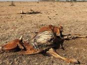 Peg:la grande siccita' 2011 stata azzeccata!!