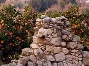 sinti Lecce ...l'arancia chiami portacallu (arancia Salento leccese)