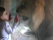 Attacco leone ragazzina