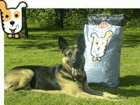 <b>Husse</b>, apri una attività per la gioia di cani e gatti
